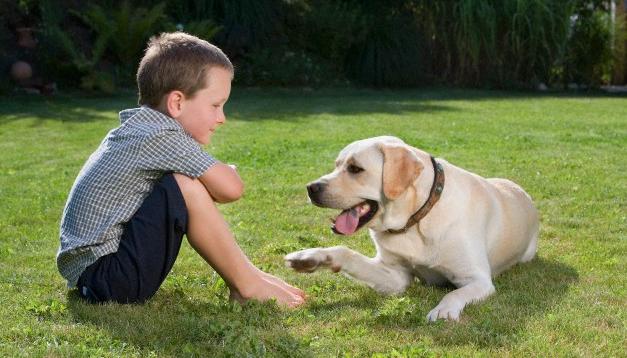 Alimenti per cane anziano. I consigli di ZAMPANDO